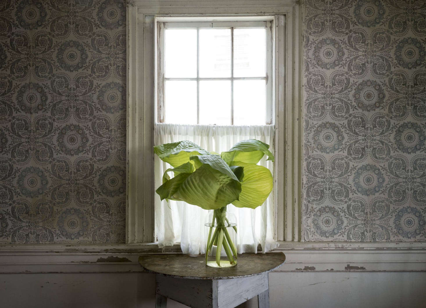 Cut broad leaves in vase in John Derian&#8