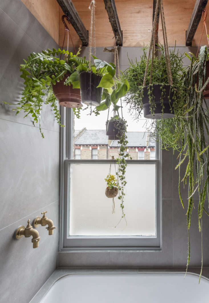 "Ferns, succulents, and other moisture-loving plants hang from the existing ceiling joists in a bathroom designed by Simon Astridge. Explains Astridge, ""The idea was to bring the outdoors in and make the space feel relaxing."" From Sky's the Limit: 5 Indoor Plants for Rooms with High Ceilings."