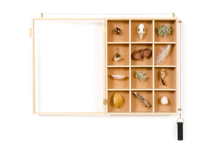 A Case for Display: Rupert's Curiosities Cabinet - Remodelista