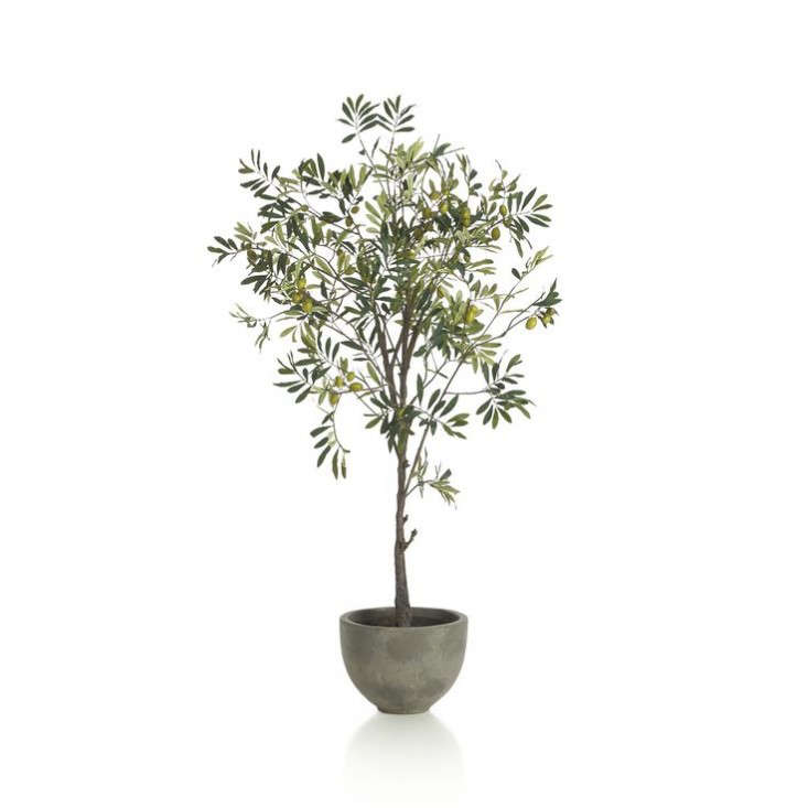 Above Crate Barrel Offers A Lifelike Looking Potted Olive Tree With Concrete Container For 199