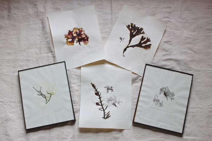 DIY: Pressed Seaweed Prints