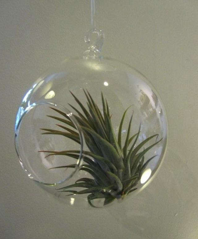 Hanging Glass Globe Mini Terrariums