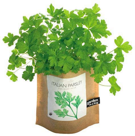 parsley garden book essay