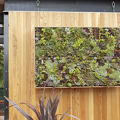 Vertical garden d i y panel for Vertical garden panels