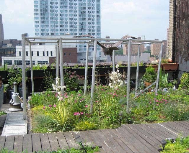 Grass Roof | Roof Garden Transformation Ideas