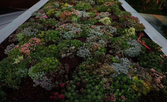 Required Reading From Terrariums To Green Roofs Remodelista