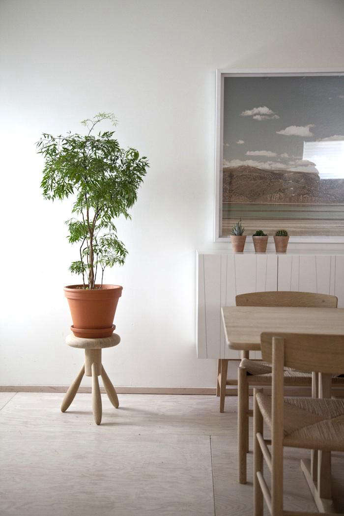 A potted shrub Ming aralia in the house of John Baker and Juli Daoust.