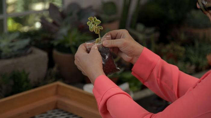 DIY Vertical Garden Kit: Just Add Water (and A Wall