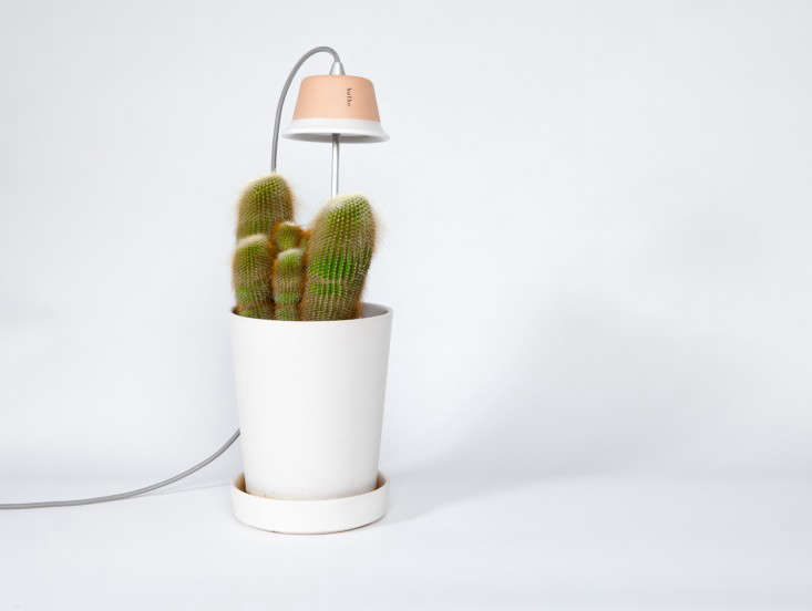 Trending on Gardenista: The 21st-Century Garden - Remodelista