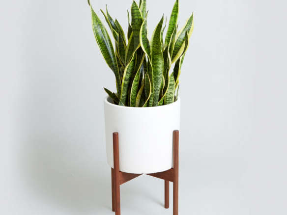 The Case Study Cylinder With Snake Plant