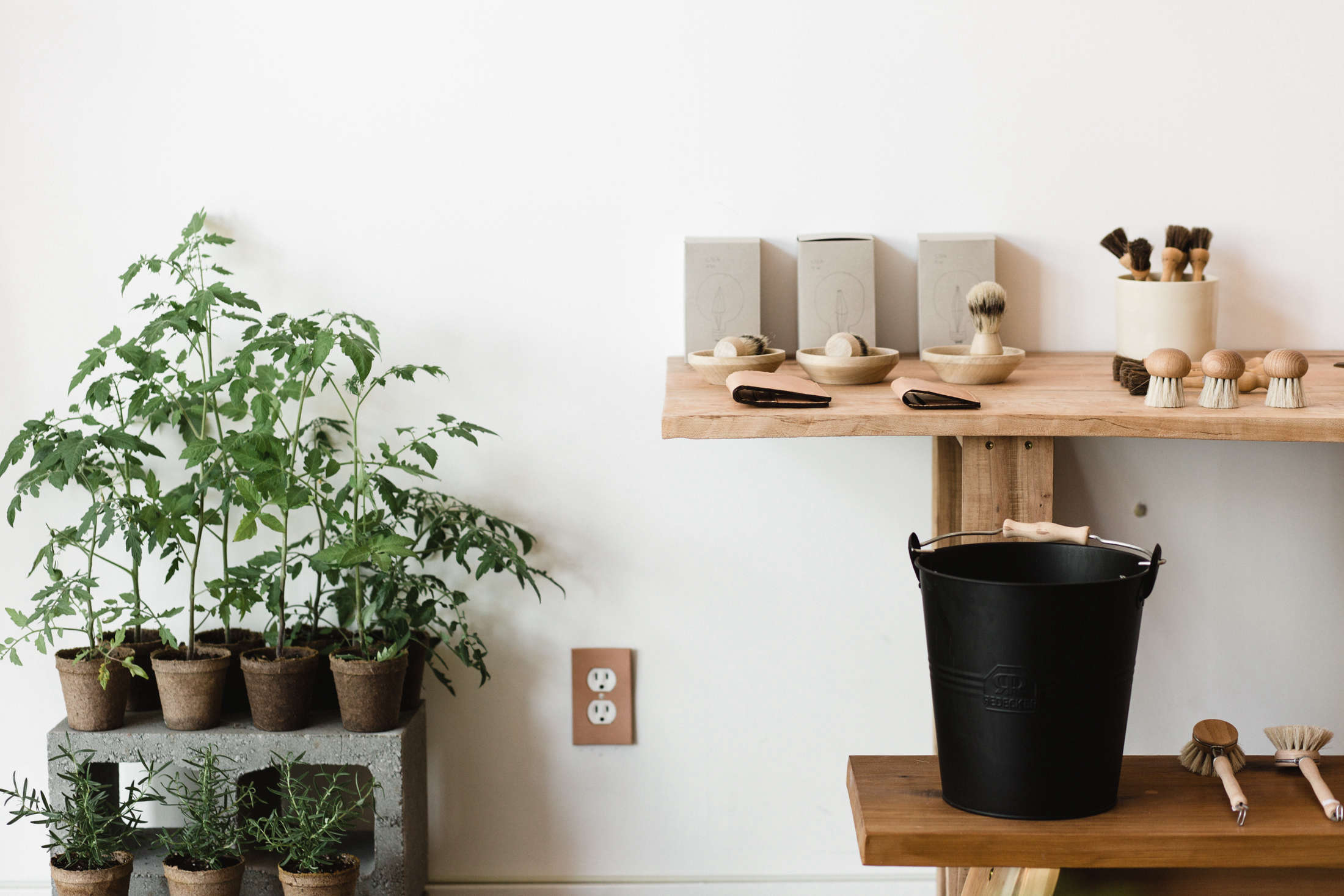 hold general store greenery with shelf kelly brown