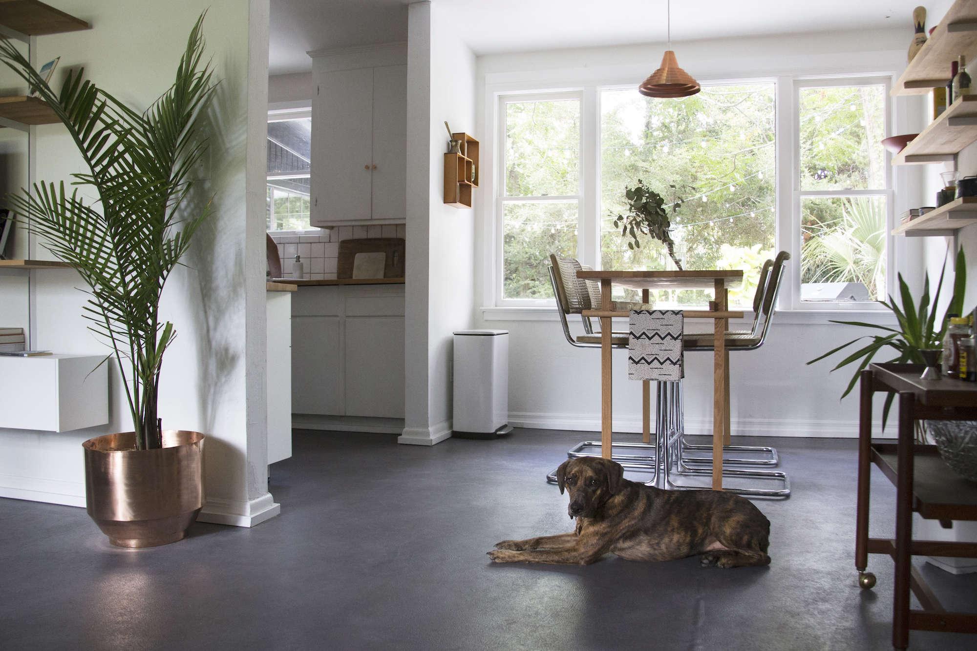 living room budget remodel dog concrete floors plants - Flooring For Dog Room