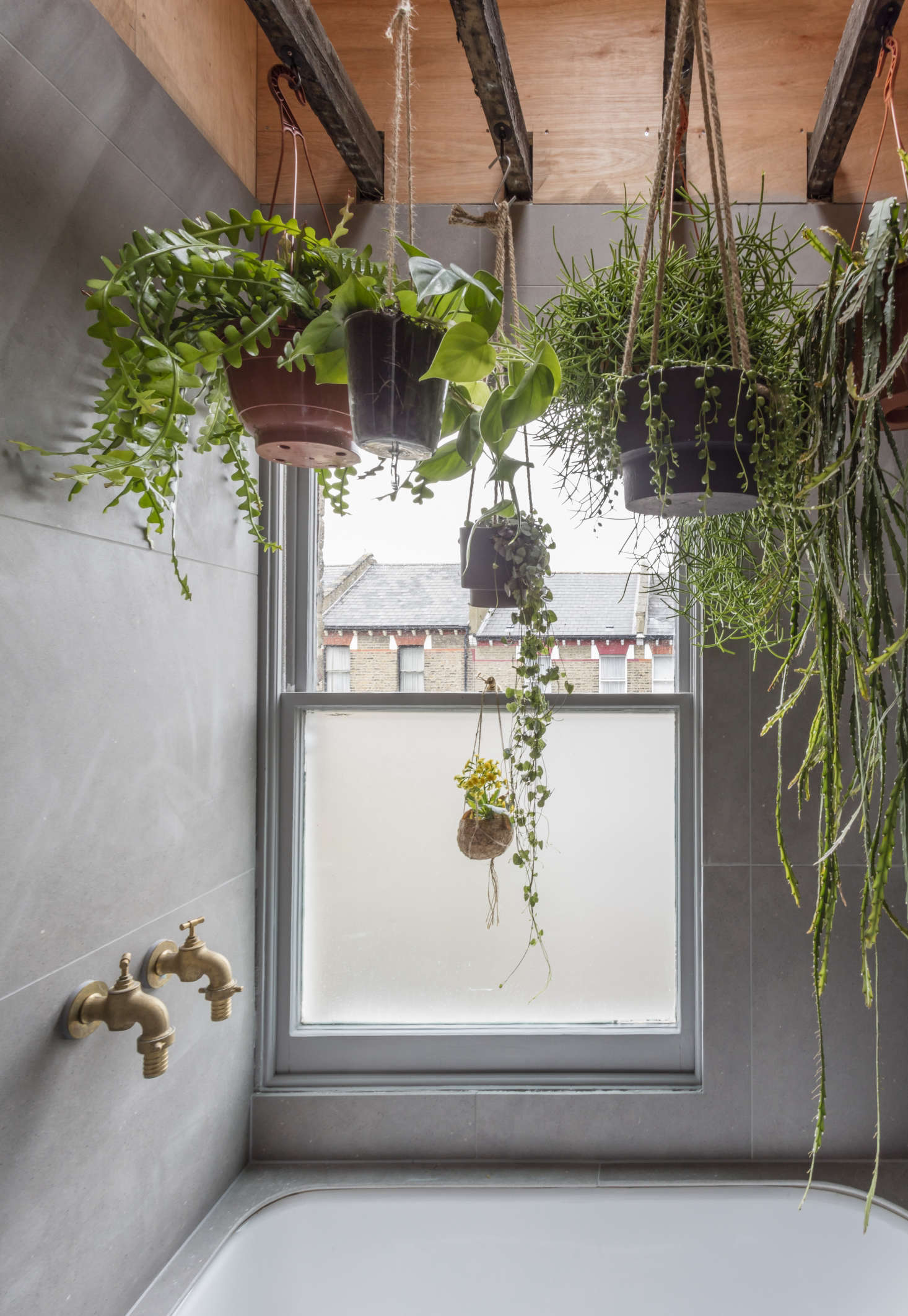 A japanese style two room bath filled with hanging plants - How to hang plants in front of windows ...