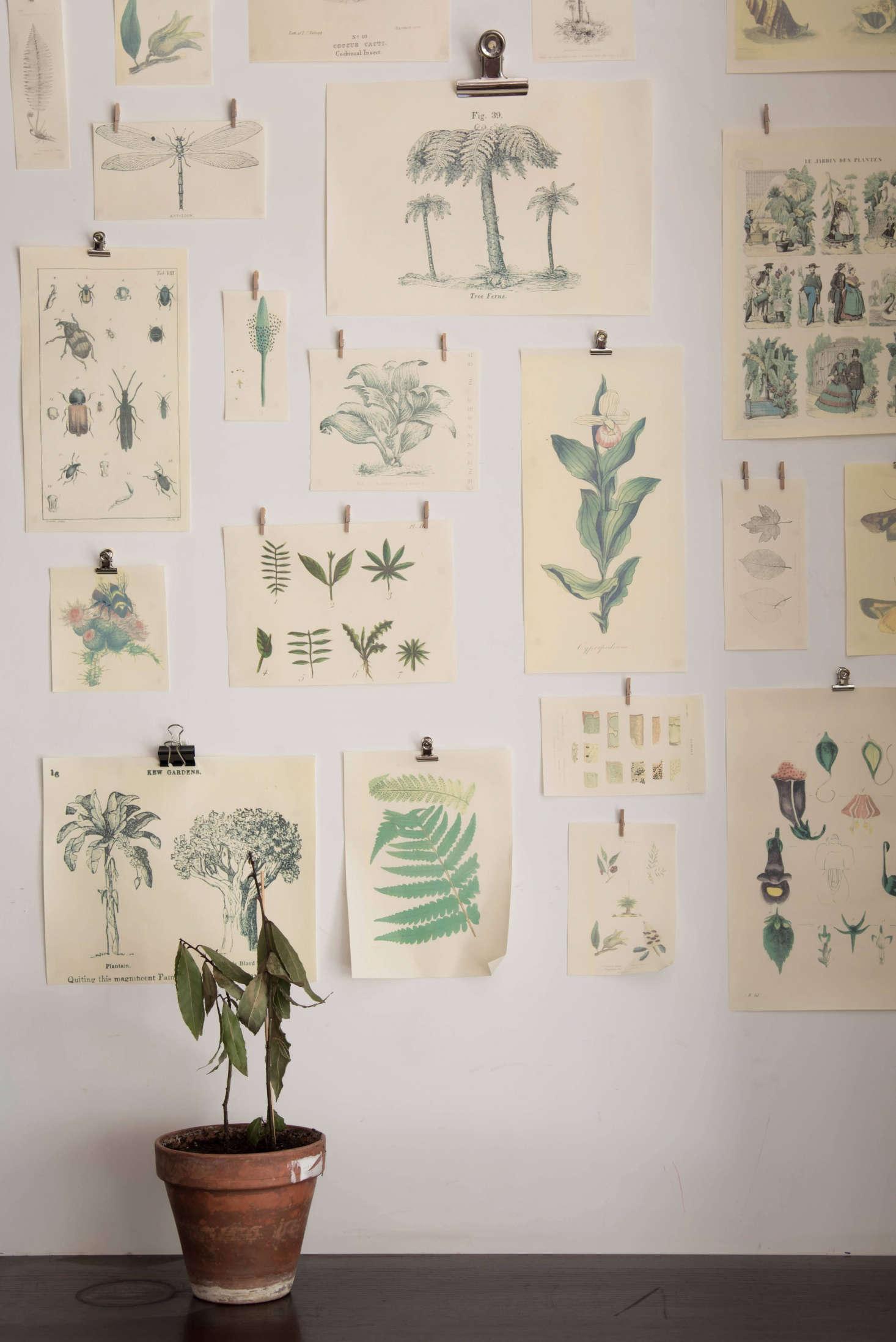 Pin It: At GreenHouse: A Natural Wine Bar In Paris, Found Botanical Drawings