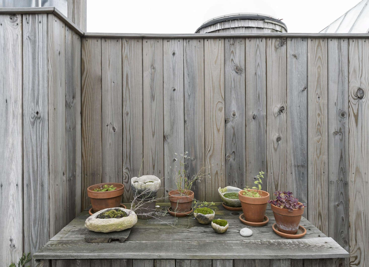 A tabletop of purple basil, twiglike herbs, and moss experiments in a mix of terracotta pots and Genevieve Chevallier Oval Pots.