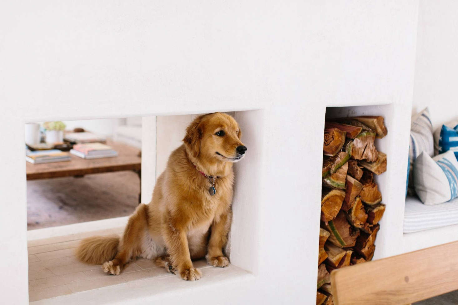 """The clients' golden retriever, Delilah, hangs out in the open fireplace connecting the living and dining rooms. Another pleasant tactile experience, notes Towill, is """"feeling the rounded edges of the plaster while you read by the fire."""""""