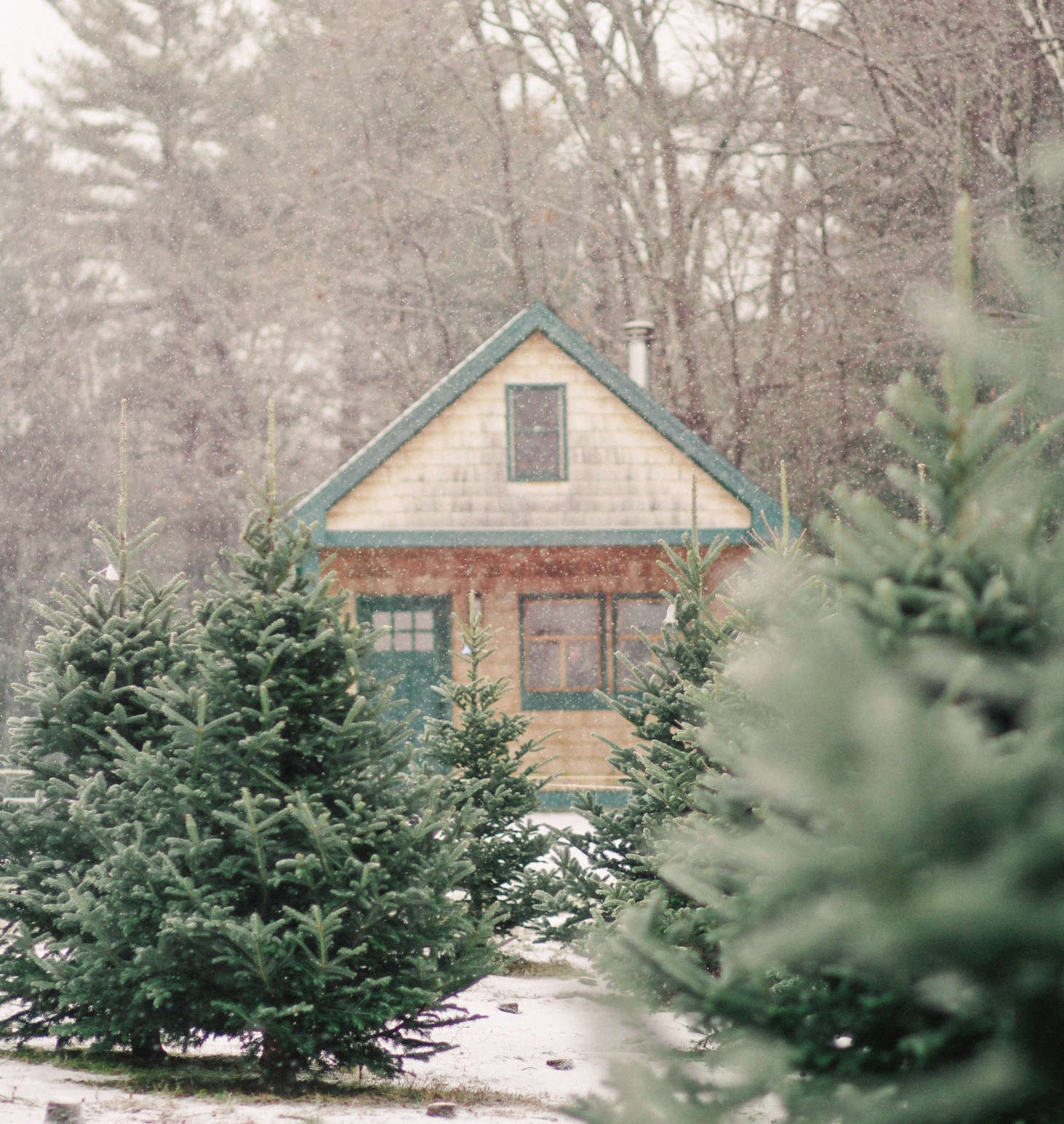 Christmas Tree Farm Network: Cooking Consistency With KitchenAid® Even-Heat™ Technology