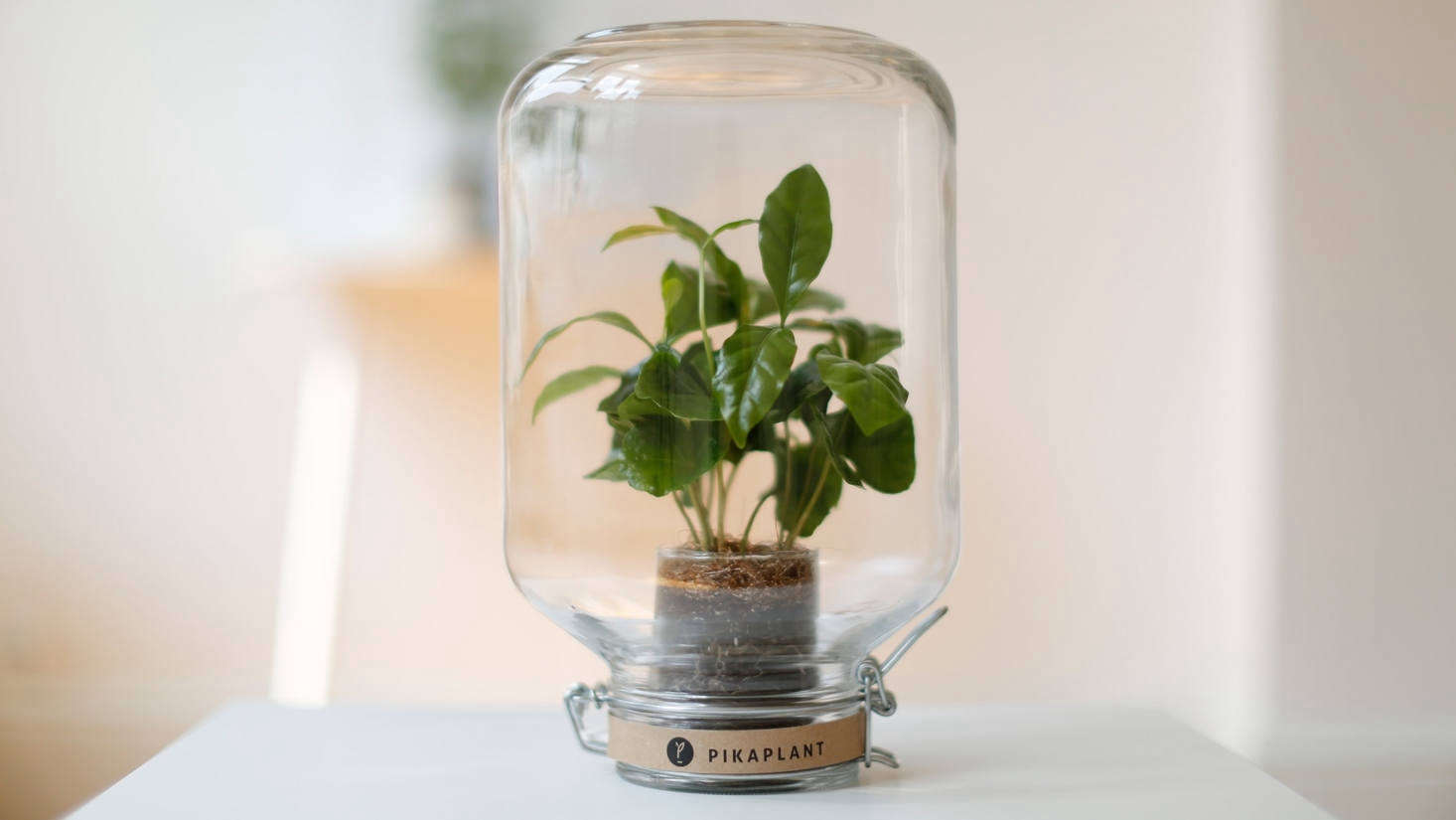 Perfect gifts for plant lovers include this self-watering (yes, you heard that right) Pikaplant. See more of the editors picks for this gifting season in Gift Guide : For the Plant Lover.