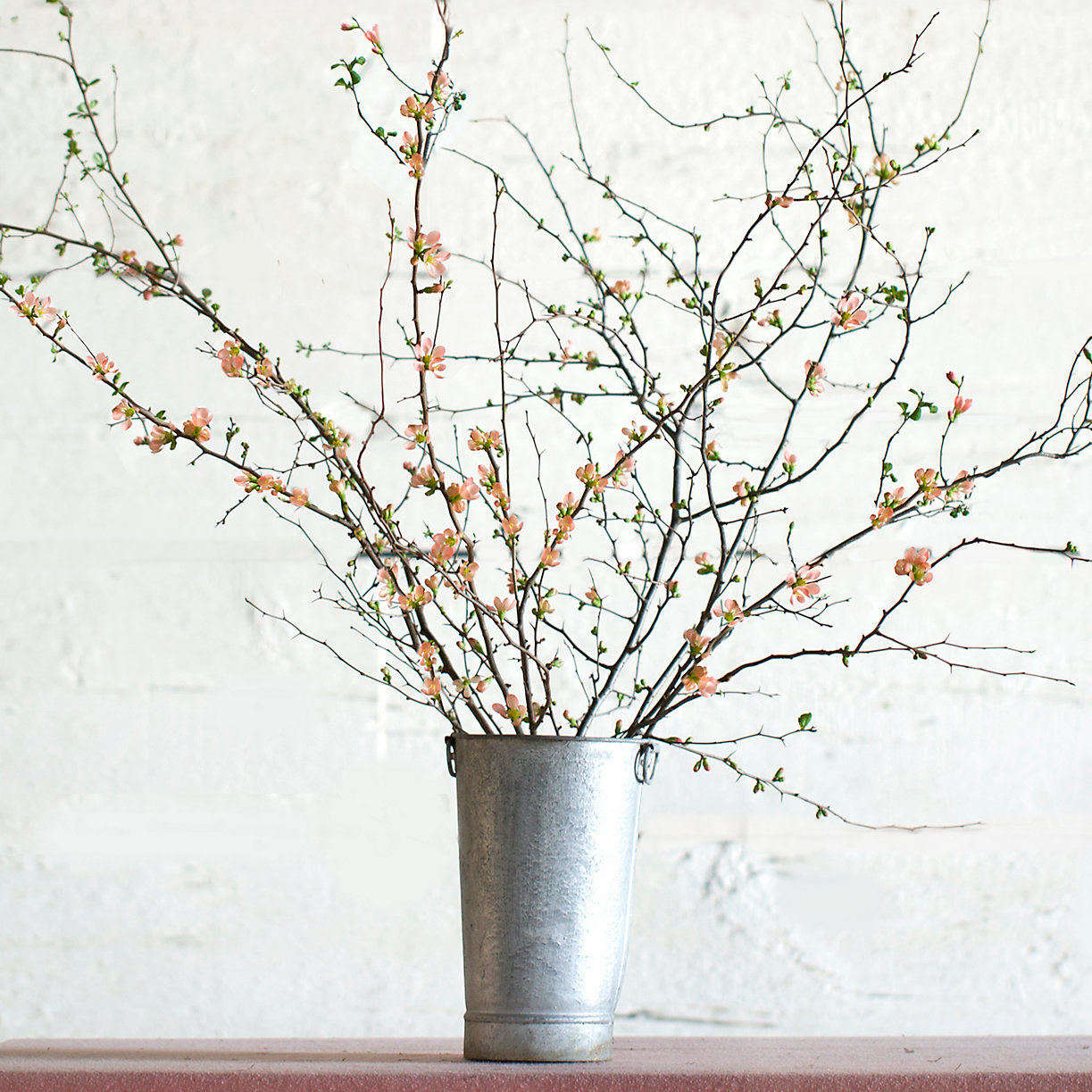 Fan would love to receive these Salmon Quince Branches from Terrain; $58 for 6 to 8 branches.