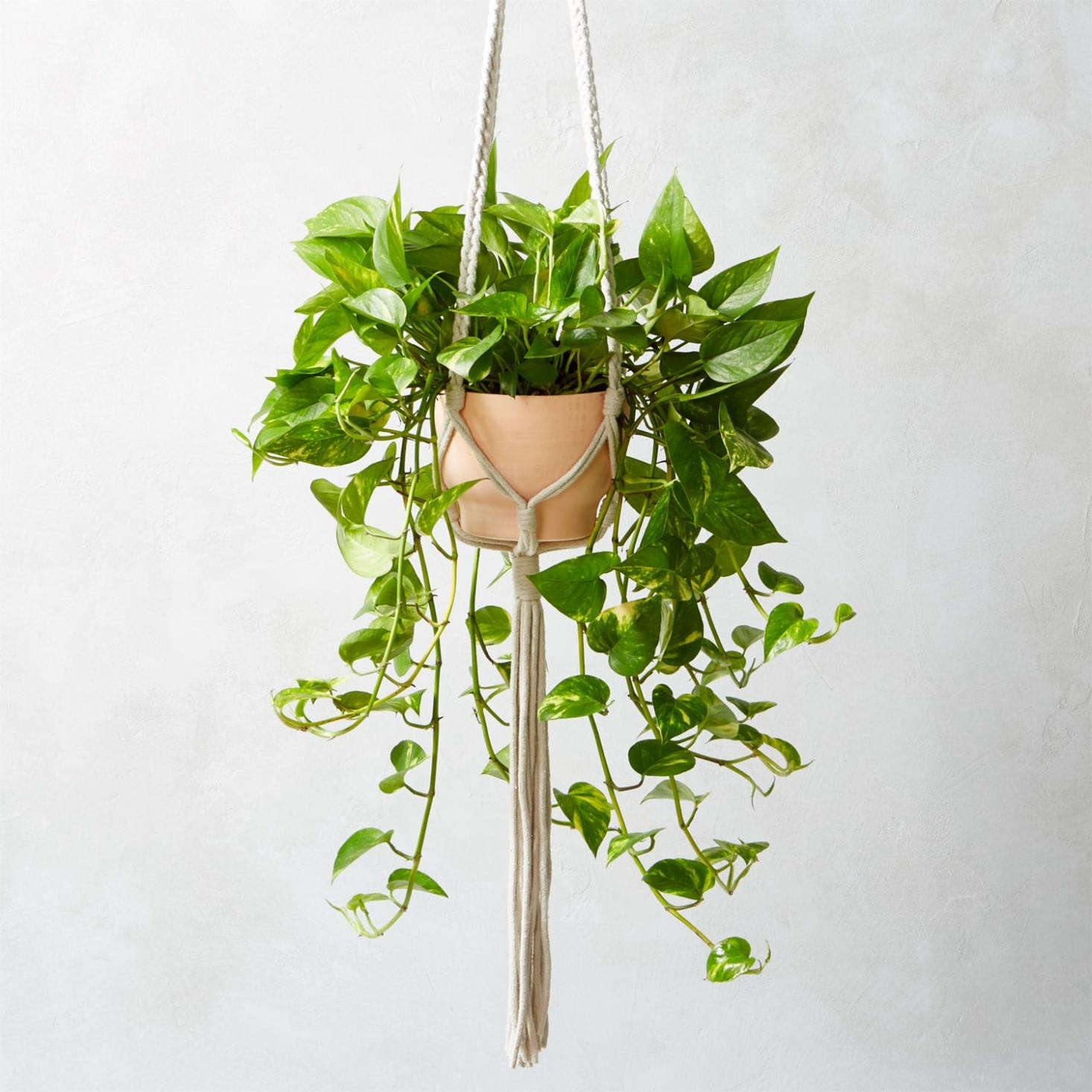 The hand-braided Macrame Plant Holder, made of cotton/nylon cord, is $.95 from CB